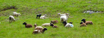 Alpage de Mont-Ferront de Magland
